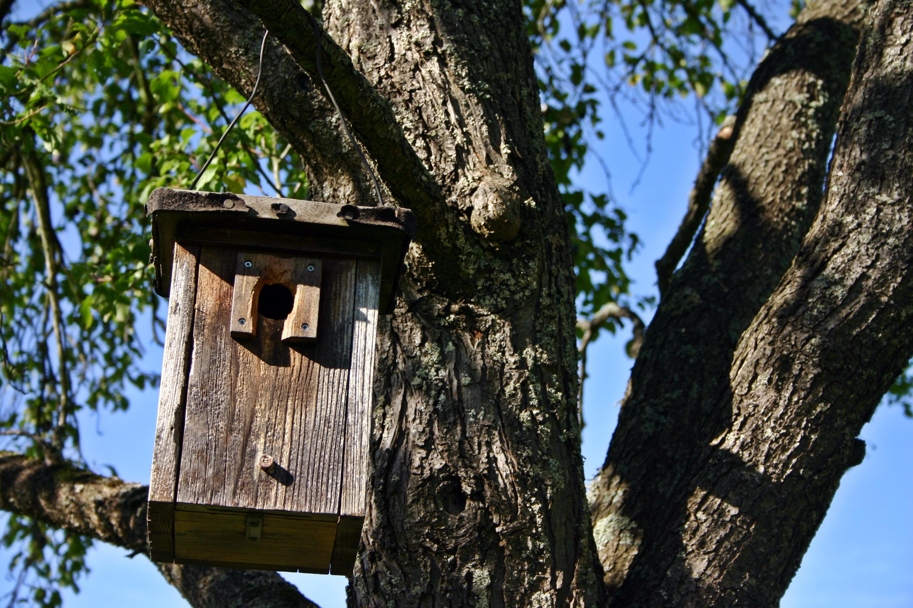 nesting-box-1728341